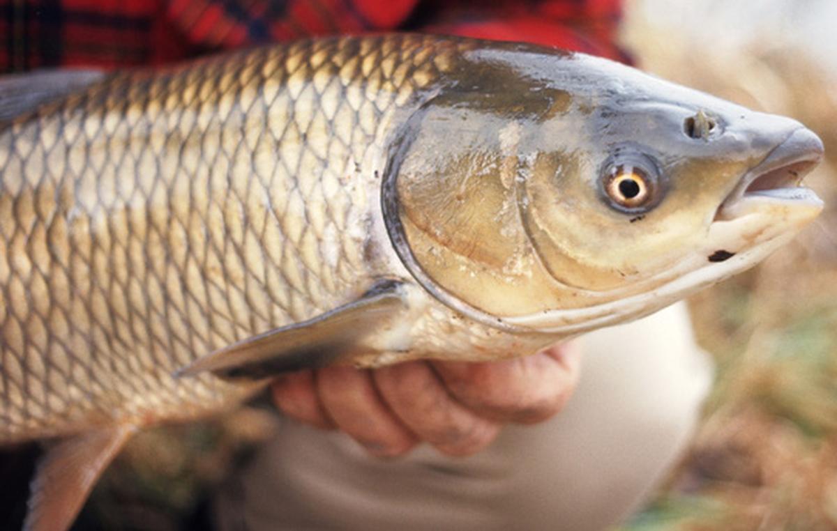 Kết quả hình ảnh cho mật cá
