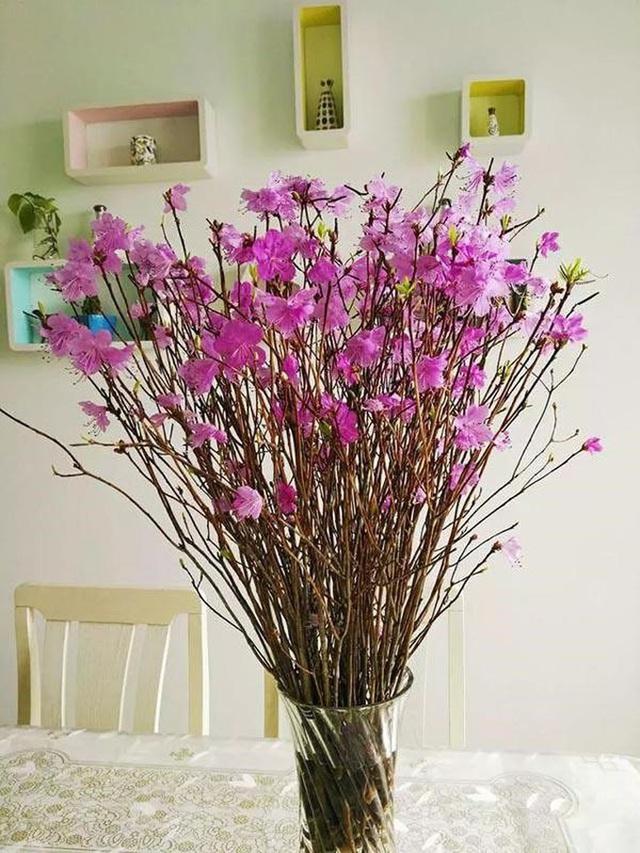 Mua hoa lạ về trưng Tết: cẩn thận độc tố - Ảnh 3.