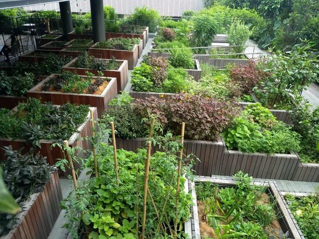 Xu hướng vườn rau cộng đồng tại Singapore - Ảnh 5.
