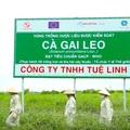 10 năm nhãn hàng Giải độc gan Tuệ Linh - vẹn tròn tình yêu cây thuốc Việt