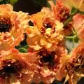 Check-in cùng những loài hoa hiếm của Nhật Bản ngay tại Hà Nội