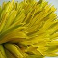 Mua hoa về nấu canh: món ngon theo mùa của các bà nội trợ