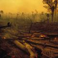 5 sự thật về rừng mưa Amazon trước đám cháy thế kỷ
