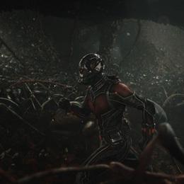 Ant-Man: Màn chào sân ngoạn mục của Người Kiến