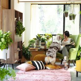 Khi công nghệ giúp thanh lọc không khí trong nhà