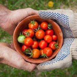 Lợi ích chữa bệnh và làm đẹp kỳ diệu của quả cà chua!