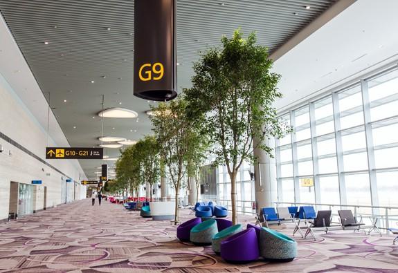 Tại sao Changi Airport được bình chọn là sân bay tuyệt vời nhất thế giới?