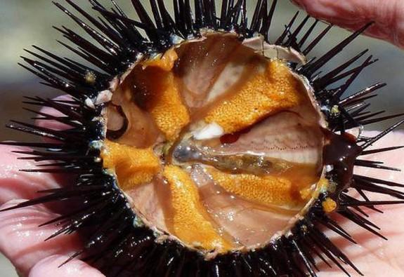Đi biển Sa Huỳnh, nên ăn đặc sản gì?