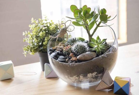 Tự tạo một Terrarium xinh xắn cho căn hộ nhỏ