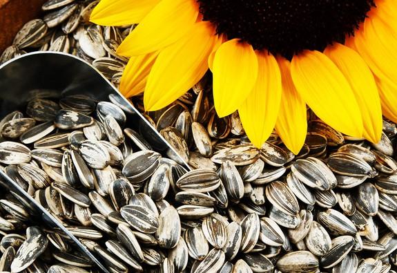 10 loại thực phẩm kích thích tóc mọc nhanh bất ngờ