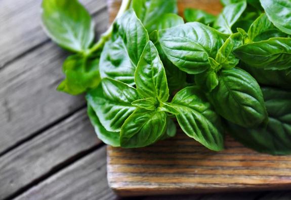 7 lợi ích sức khỏe khi bạn ăn húng quế tươi