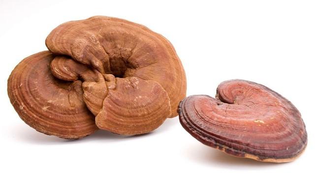 Thanh nhiệt, giải độc nhờ nấm linh chi - Ảnh 2.
