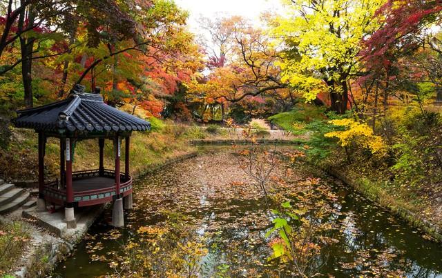 Cung điện Changdeokgung – nơi đẹp nhất để ngắm mùa thu Hàn Quốc - Ảnh 14.