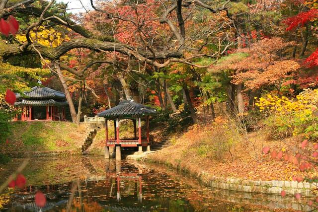 Cung điện Changdeokgung – nơi đẹp nhất để ngắm mùa thu Hàn Quốc - Ảnh 15.
