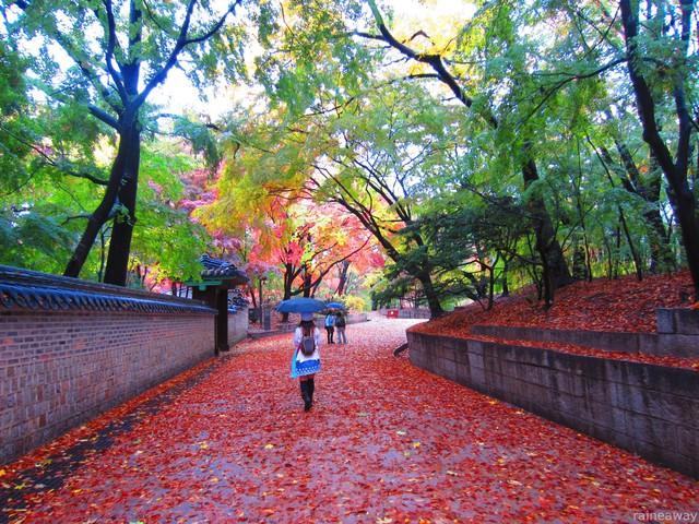 Cung điện Changdeokgung – nơi đẹp nhất để ngắm mùa thu Hàn Quốc - Ảnh 7.