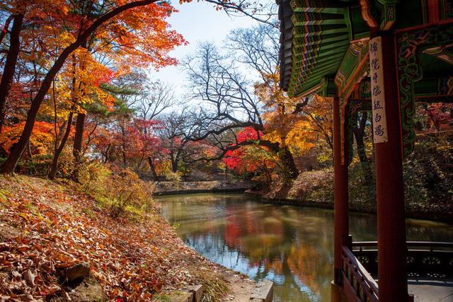 Cung điện Changdeokgung – nơi đẹp nhất để ngắm mùa thu Hàn Quốc - Ảnh 6.