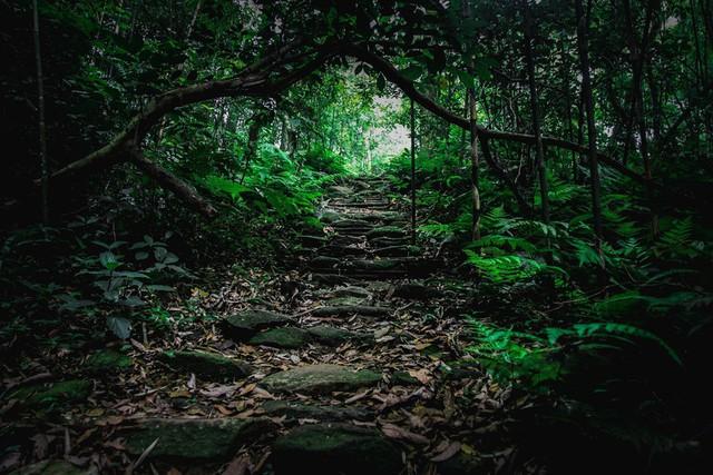 8 địa điểm để bạn làm quen với trekking tại Việt Nam - Ảnh 4.