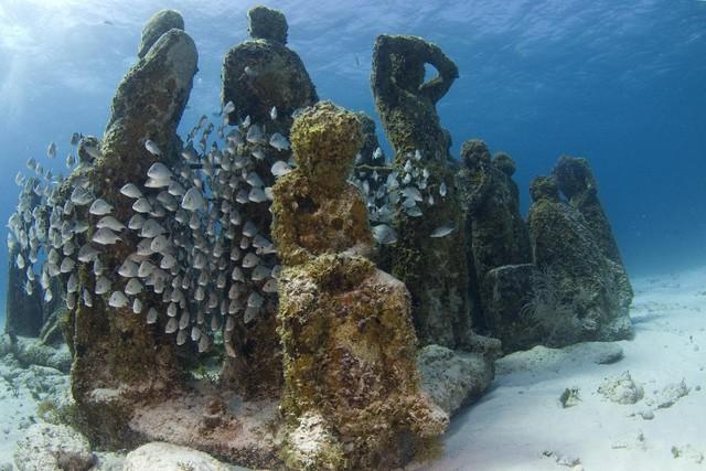 Lặn biển để ngắm những pho tượng bí ẩn và tuyệt đẹp - Ảnh 9.