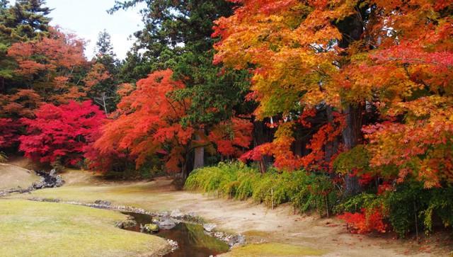 Lên chuyến tàu đến Tohoku mùa lá đỏ - Ảnh 3.