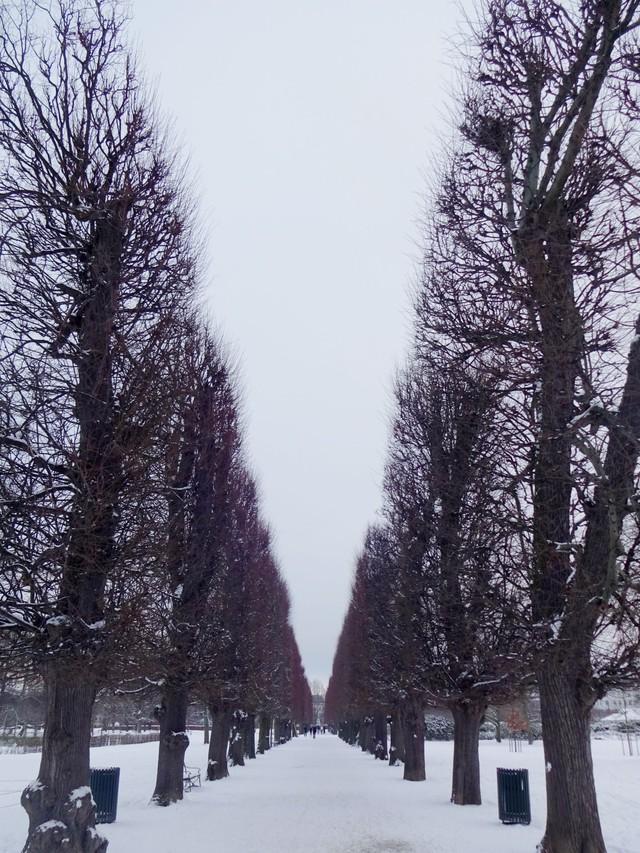 Ngắm Copenhagen vào một ngày mùa đông - Ảnh 6.