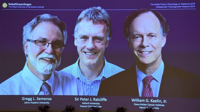 Giải Nobel Y học 2019 đã có chủ - Ảnh 2.