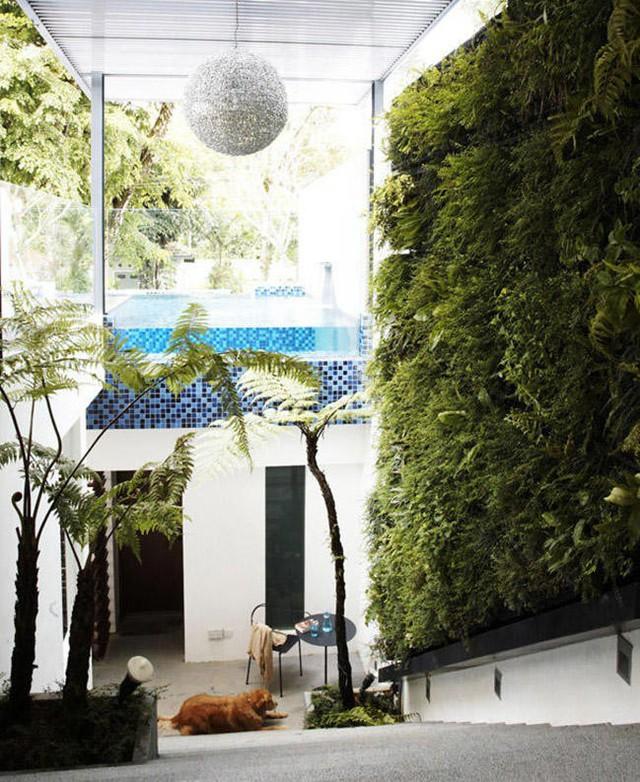 10 ý tưởng đưa cây vào trong nhà - Ảnh 1.