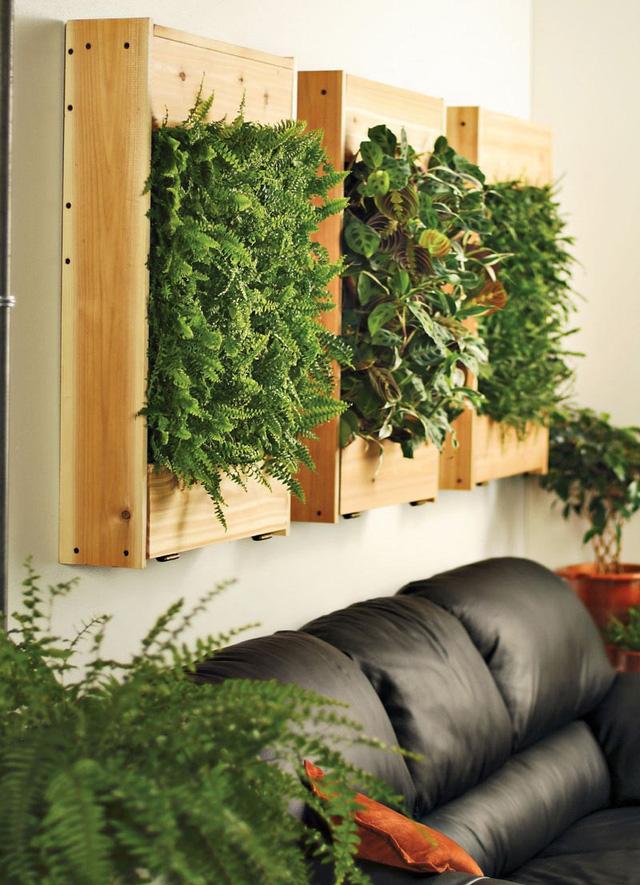 10 ý tưởng đưa cây vào trong nhà - Ảnh 9.