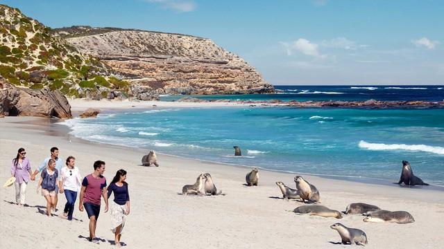Kangaroo Island: đến thật gần thiên nhiên hoang dã - Ảnh 5.