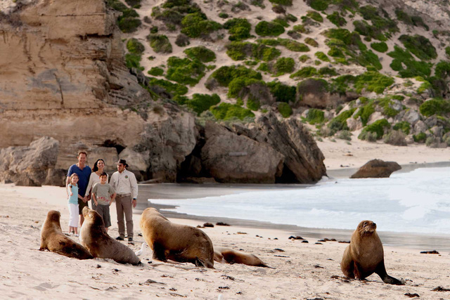 Kangaroo Island: đến thật gần thiên nhiên hoang dã - Ảnh 13.
