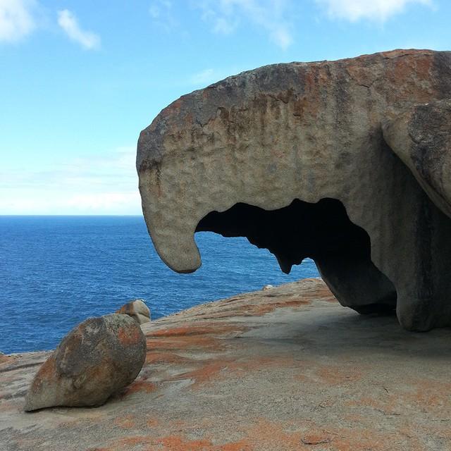 Kangaroo Island: đến thật gần thiên nhiên hoang dã - Ảnh 1.
