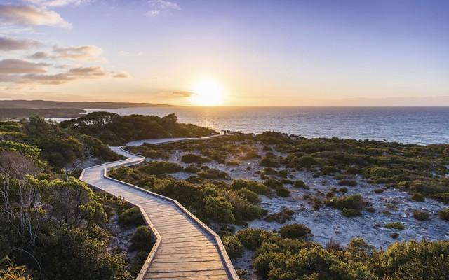 Kangaroo Island: đến thật gần thiên nhiên hoang dã - Ảnh 4.
