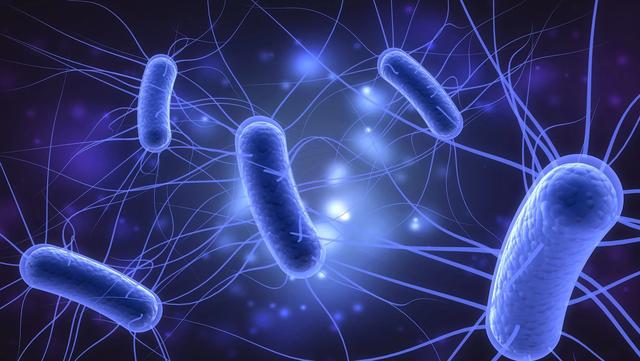 Báo động vi khuẩn E.coli kháng kháng sinh tại Việt Nam - Ảnh 1.
