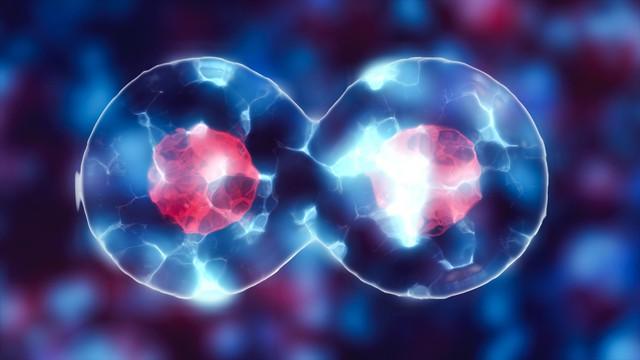 Tế bào gốc: hy vọng mới của người mắc bệnh tim? - Ảnh 1.