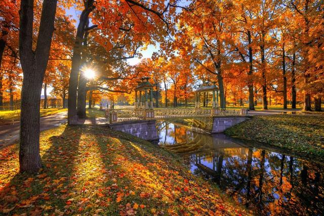 Ngắm mùa thu vàng ở cố đô của nước Nga - Ảnh 2.