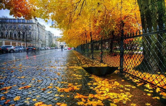 Ngắm mùa thu vàng ở cố đô của nước Nga - Ảnh 7.