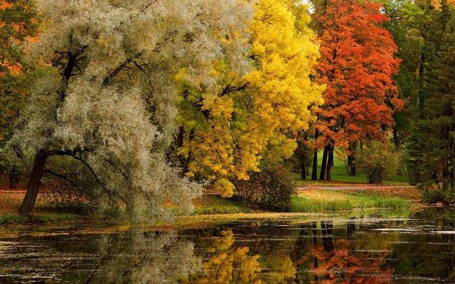 Ngắm mùa thu vàng ở cố đô của nước Nga - Ảnh 8.