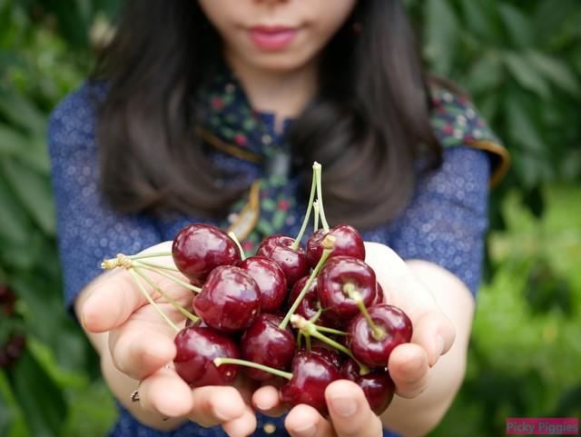 Người tiêu dùng dễ nhầm lẫn cherry Mỹ và Trung Quốc - Ảnh 1.