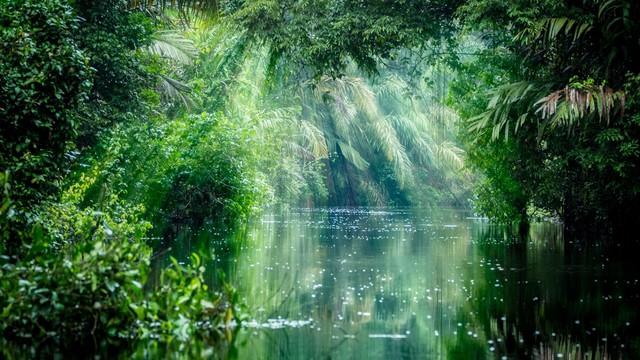5 sự thật về rừng mưa Amazon trước đám cháy thế kỷ - Ảnh 2.
