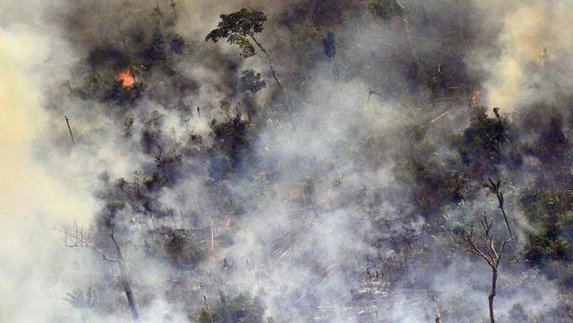 5 sự thật về rừng mưa Amazon trước đám cháy thế kỷ - Ảnh 1.