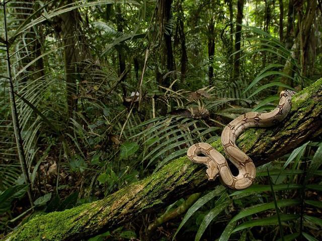 5 sự thật về rừng mưa Amazon trước đám cháy thế kỷ - Ảnh 3.