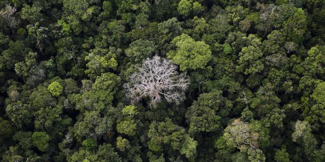 5 sự thật về rừng mưa Amazon trước đám cháy thế kỷ - Ảnh 4.