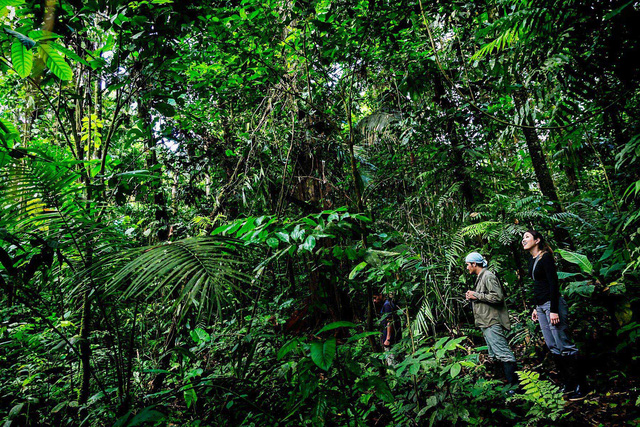 5 sự thật về rừng mưa Amazon trước đám cháy thế kỷ - Ảnh 5.