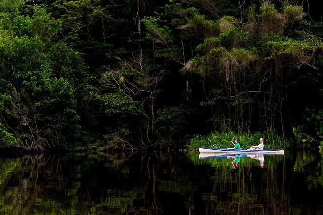 5 sự thật về rừng mưa Amazon trước đám cháy thế kỷ - Ảnh 9.