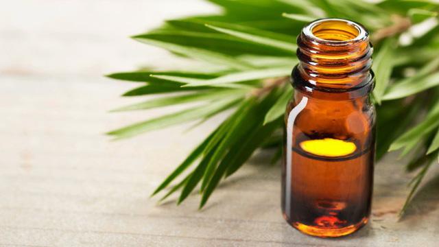 Những phương thuốc tự nhiên tuyệt vời để chữa bệnh - Ảnh 14.