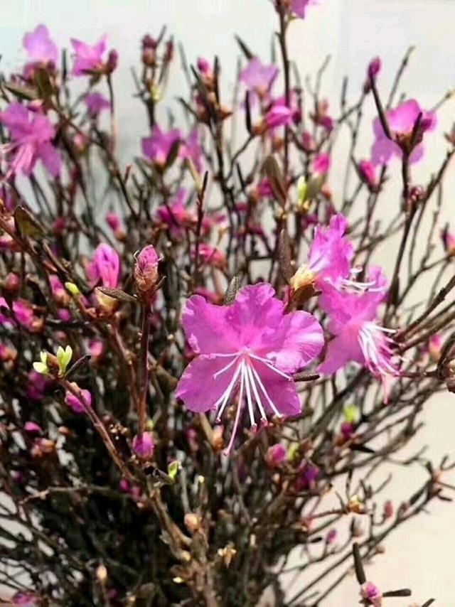 Mua hoa lạ về trưng Tết: cẩn thận độc tố - Ảnh 2.