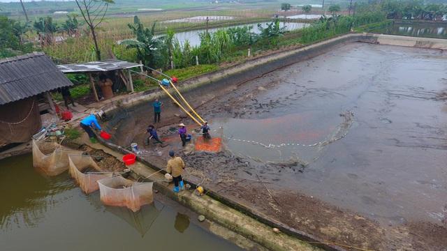 Làng cá chép đỏ Thủy Trầm trước ngày 23 tháng Chạp - Ảnh 1.