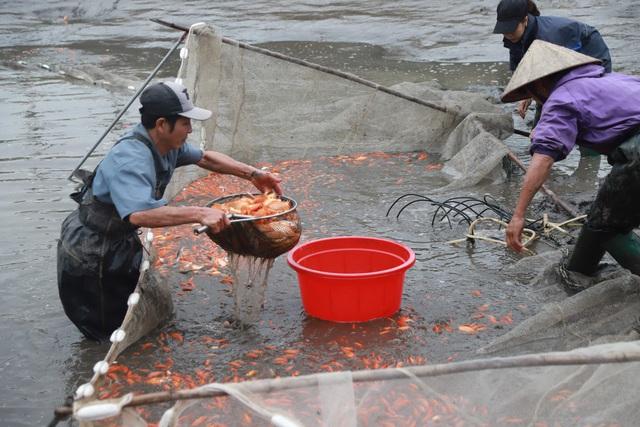 Làng cá chép đỏ Thủy Trầm trước ngày 23 tháng Chạp - Ảnh 2.