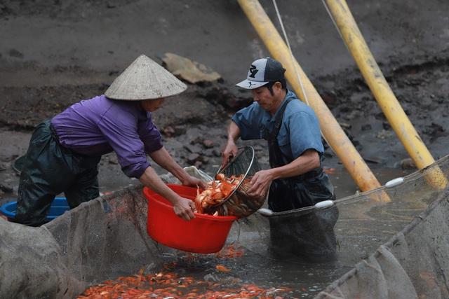 Làng cá chép đỏ Thủy Trầm trước ngày 23 tháng Chạp - Ảnh 6.