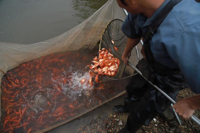 Làng cá chép đỏ Thủy Trầm trước ngày 23 tháng Chạp - Ảnh 11.