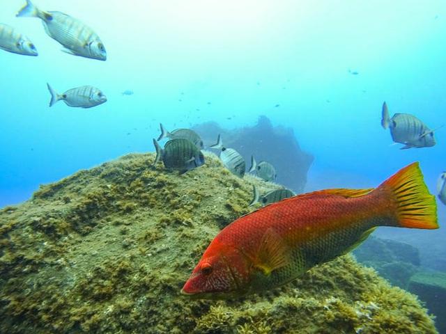 Quần đảo Madeira được vinh danh là điểm đến tốt nhất ở châu Âu  - Ảnh 8.